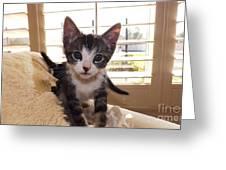 Curious Kitten Greeting Card