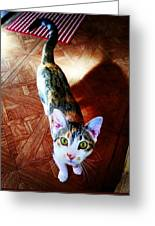 Curious Kitty Greeting Card
