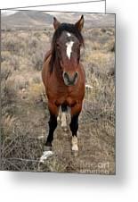 Curious Mustang Greeting Card