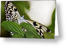 Curious Paper Kite Greeting Card