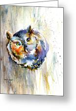 Curious Screech Owl Greeting Card