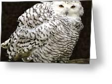 Curious Snowy Owl Greeting Card