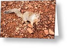 Curious Squirrel 2 Greeting Card