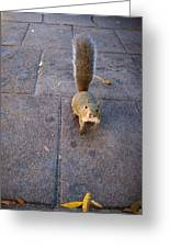 Curious Squirrel Greeting Card
