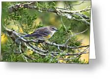 Curious Warbler Greeting Card