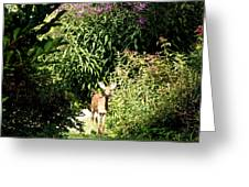 Curious Youngster Greeting Card