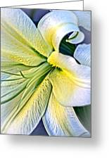 Curl Of A Lily Greeting Card