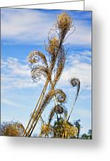 Curled Grasses Greeting Card