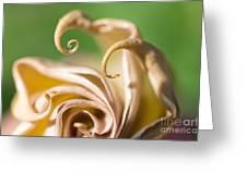Curled Petals Greeting Card