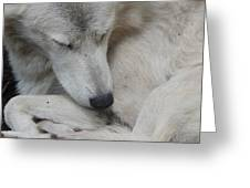 Curled Up Greeting Card