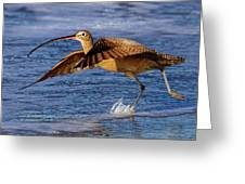 Curlew Preparing For Take Off Greeting Card