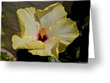 Curlied Hibiscus Greeting Card