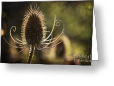 Curly And Spiky. Greeting Card