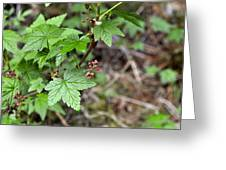 Currant Flower Greeting Card