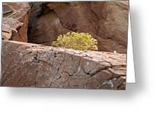 Curved Rocks And Bush Greeting Card