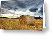 Cut Field Greeting Card by Jane Rix