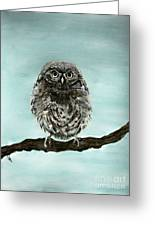 Cute Baby Owl Greeting Card