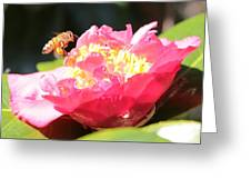 Cute Bee On Camellia Greeting Card