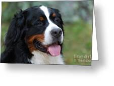 Cute Bernese Mountain Dog Greeting Card