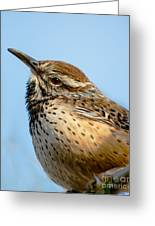 Cute Cactus Wren Greeting Card by Robert Bales