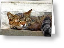 Cute Cat Greeting Card by Borislav Marinic