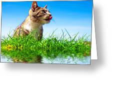 Cute Cat Outdoor Portait Greeting Card