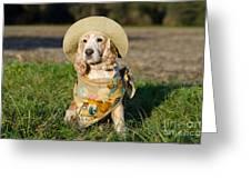 Cute Dog Greeting Card