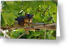 Cute Fuzzy Squirrel In Tree Greeting Card