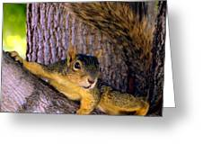 Cute Fuzzy Squirrel In Tree Near Garden Greeting Card