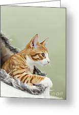Cute Ginger Kitten On The Loookout Greeting Card