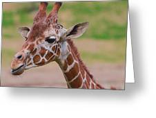 Cute Giraffe Portrait  Greeting Card