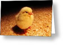 Cute Little Chick Greeting Card