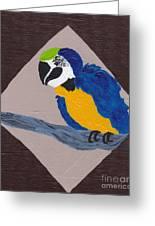 Cute Little Macaw  Greeting Card