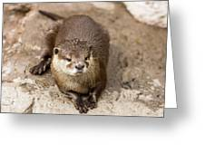 Cute Otter Portrait Greeting Card