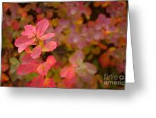 Cute Pink Plant Greeting Card