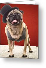 Cute Pug Dog In Vest And Top Hat Greeting Card by Edward Fielding
