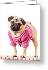 Cute Pug Wearing Sweater Greeting Card
