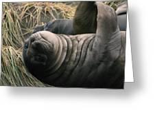 Cute Seal Greeting Card