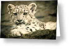 Cute Snow Cub Greeting Card