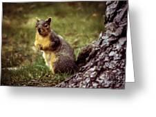 Cute Squirrel Greeting Card by Robert Bales