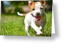 Cute Stafford Puppy Running On Field Greeting Card