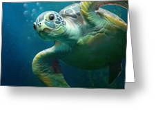 Bubbles The Cute Sea Turtle Greeting Card