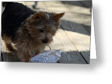 Cutest Dog Ever - Animal - 011311 Greeting Card by DC Photographer