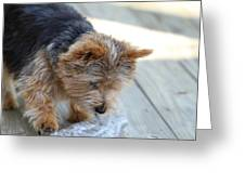 Cutest Dog Ever - Animal - 011313 Greeting Card by DC Photographer