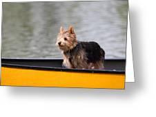 Cutest Dog Ever - Animal - 011342 Greeting Card