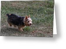 Cutest Dog Ever - Animal - 011345 Greeting Card by DC Photographer