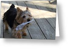 Cutest Dog Ever - Animal - 01135 Greeting Card by DC Photographer