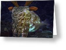 Cuttlefish With Reindeer Hat Greeting Card