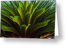 Cycad Sago Palm Greeting Card