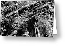 Cycads At Cliffs' Edge Black And White Greeting Card